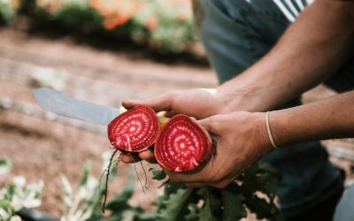 Farm Feature: O'Connell Organic Acres
