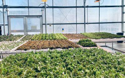 Farm Feature: Hilltop Greens